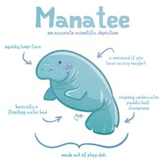 will draw for cookies: accurate depictions of animals: manatee edition