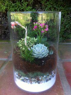 Terrario de cactus en pecera kali flowers pinterest - Kit terrarium plante ...