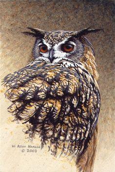 W Allan Hancock   ACRYLIC            Eagle Owl