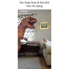 Funny Dog Videos, Funny Dog Pictures, Cute Funny Dogs, Cute Funny Animals, Funny Text Memes, Puppy Dog Eyes, Super Cute Animals, Dog Selfie, Puppy Party
