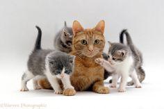 kittens - Google Search