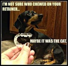 Gellerman Orthodontics Blog: HOW I LOST MY RETAINER. WHAT'S YOUR STORY?