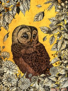 'October Owl' by Angela Rizza. A beautiful owl illustration. Framed Art Prints, Canvas Prints, Owl Illustration, Illustrations, Strix Aluco, Yellow Throw Blanket, Tawny Owl, Owl Always Love You, Tatoo