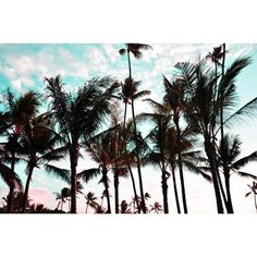 Oracle Fox: Hawaii Photo Diary ❤ liked on Polyvore featuring pictures, backgrounds, photos, places and tumblr