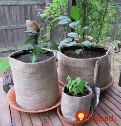 Collapsible easy-to-store Burlap Girdles are perfect for gardening anywhere--from back yard to balcony….just in case you don't have a set yet! From The Seed Keeper Company Jute, Veg Garden, Garden Planters, Growing Herbs, Growing Vegetables, Container Plants, Container Gardening, Flower Gardening, Grow Bags