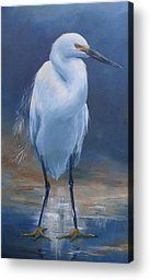 Snowy Egret Painting by Kathleen Tucker - Snowy Egret Fine Art Prints and Posters for Sale