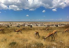 NAmibia-Landschaft
