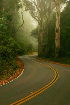 Winding road. What motorcycle dreams are made of!