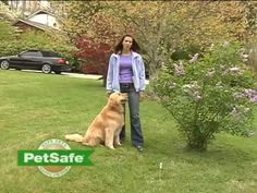 Whether you're considering a or an invisible fence, training is one of the most essential parts of both systems. Check out this PetSafe video to learn more about what's involved in the process for either type of invisible fence. Pet Dogs, Dogs And Puppies, Pets, Invisible Fence, Wireless Dog Fence, Aggressive Dog, Training Your Dog, Mans Best Friend, Dog Life