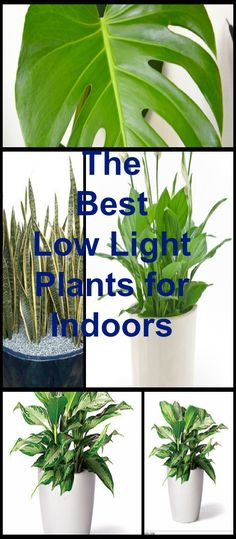 Sansevieria are a good example of plants that do well indoors in places where…