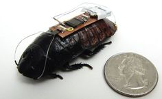 Cockroaches save lifes