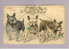 French bulldogs - Joyeux Noel