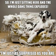 32 Memes About How Your Pet May Be An A$$hole - QuotesHumor.com