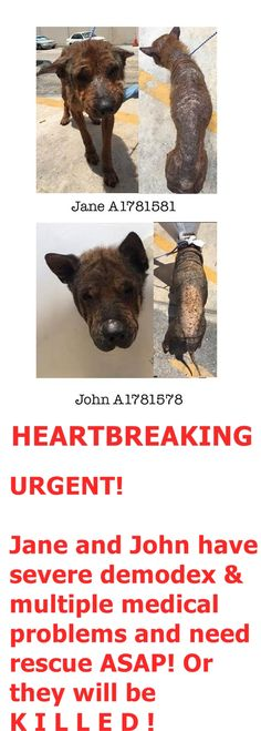 JANE RESCUED 5-19-16, John still there --- located at Miami Dade Shelter. It is a HIGH KILL SHELTER https://www.facebook.com/urgentdogsofmiami/photos/pb.191859757515102.-2207520000.1462302701./1188287731205628/?type=3&theater