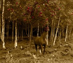 Horse and Rowan Photograph - Large print by stargirlstreasures
