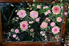 Antique Roses - Jeanette Designs
