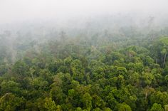 New maps reveal more complex picture of Sumatran fires   CIFOR Forests News Blog