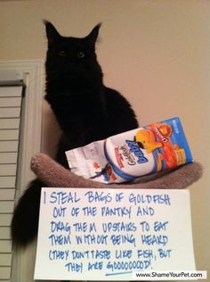 The best of cat shaming - Part 6 - Broke Girls Do Bad ThingsBroke Girls Do Bad Things