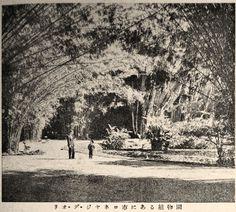"""Botanical Garden in Rio de Janeiro, Brazil"", Juvenile Encyclopedia, 1932 Vol. 14 World Geography 兒童百科大辭典 第十四巻 地理篇(三) 玉川學園出版部 昭和七年"