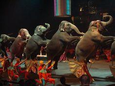 Para: Intendente de San Isidro, Gustavo Posse y Concejo Deliberante de San Isidro Declaración de ciudad libre de circos con animales