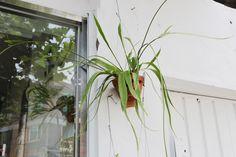 [식물가게 플럼] PLUM Plants The Botanical Garden and Design Studio. Green life