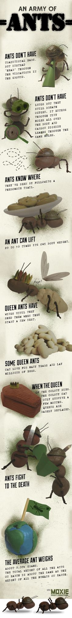 natural remedies to get rid of ants and spiders. #earthday