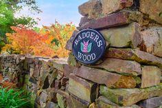 Wood, Garden, Garten, Woodwind Instrument, Timber Wood, Wood Planks, Gardens, Trees, Tuin