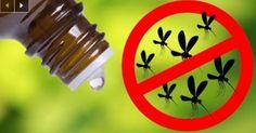 Cette huile essentielle est plus efficace que les insecticides !!