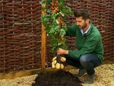 Growing Tomatoes From Seed Paradise Read: What Plants to Avoid Planting Together