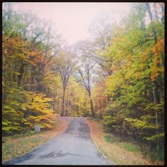 Chestnut Ridge- Buffalo, NY