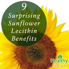 9 Surprising Sunflower Lecithin Benefits