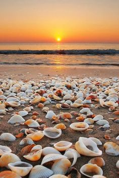 So many shells! Beach photography sunset