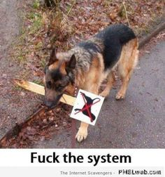 26-dog-fucks-the-system-humor.png (450×481)
