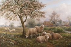 Spring Time ~ Arthur Trevor Haddon Sheep Paintings, Spring Time, Fine Art, Visual Arts, Fine Art Paintings