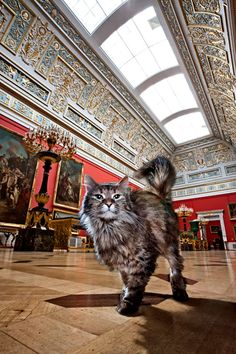 "This is Tikhon, one of the famous Hermitage Museum cats, in the Large Italian Skylight Hall. ""Named after the pagan god of fate, old-timer Tikhon is extremely discreet and thorough. As fate itself would have it, they brought Tikhon from the General Staff building to the Great Hermitage, where he became the unofficial leader of all the palace cats.""  You can read more about the Hermitage cats here:     https://02varvara.wordpress.com/tag/hermitage-museum/"
