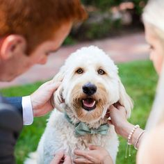 A pup as your bearer is beyond adorable...until he takes off with your wedding bands!