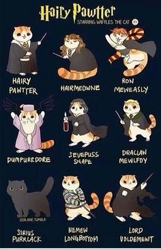 Harry Potter as cats. YES