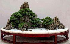 Bonsai incredible.