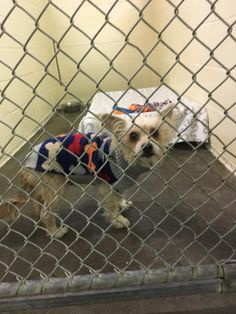 West Haven Animal Shelter added 2 new photos. January 7 ·  ***REUNITED WITH OWNER*** ***FOUND DOG*** Found roaming on Main St, male mixed breed dog, no collar or tags. If anyone has any info on this little guy please call the shelter at 203-937-3642