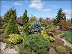 A very colorful spring in the Jean Iseli Memorial Garden!
