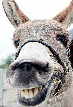 Happy mule!