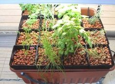 Hydrofarm MegaGarden hobby hydroponic system planted up with a variety of herbs. Ebb And Flow Hydroponics, Hydroponic Herb Garden, Hydroponics System, Aquaponics, Bee Friendly Flowers, Urban Farming, Growing Plants, Outdoor Fun, Agriculture