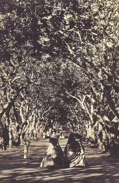 Vistas do Jardim Botânico (c. 1860), fotografia R. H. Klumb. Rio de Janeiro 1840-1900 - uma crônica fotográfica, George Ermakoff.