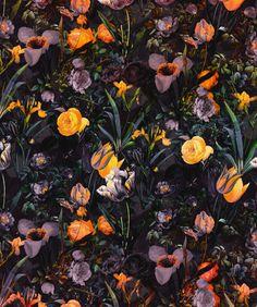 ARTS N SKILLS — FLORAL ILLUSTRATIONS BY BURCU KORKMAZYUREK More...