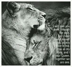 Discover and share Every Queen Needs A Lion King Quotes. Explore our collection of motivational and famous quotes by authors you know and love. Lioness Quotes, Animals And Pets, Cute Animals, Lion Love, Love Quotes, Inspirational Quotes, Couple Quotes, Jolie Photo, Big Cats