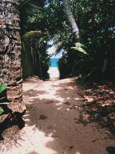 pathway to paradise.