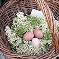 Fleurs de Bourrache cristallisées - Semences-Partage.net Cookies Et Biscuits, Avatar, Flowers, Canning, Recipes