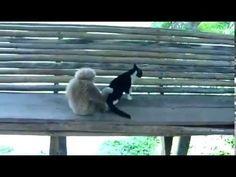 ▶ El mono y el gato - YouTube