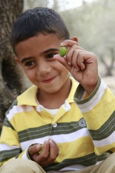 This Palestinian farmer's son holds an olive, their national treasure. Fair trade has made olive farming a sustainable living again, even in a conflict region. Canaan Fair Trade farmers get paid at the olive press, so they can put their next crop in the ground, put the addition on their house, educate their children, live their lives.