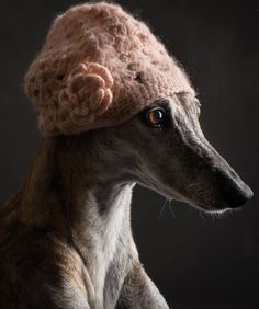 Greyhound Photographer: Paul Croes